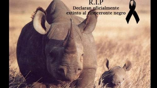 RIP rinoceronte-negro