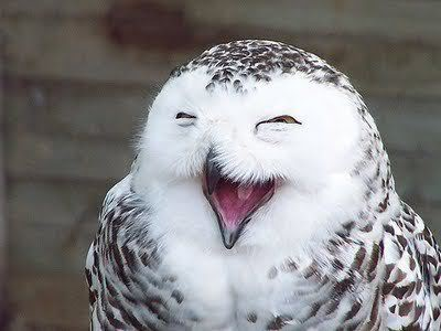 0 CFvR Smiling_white owl